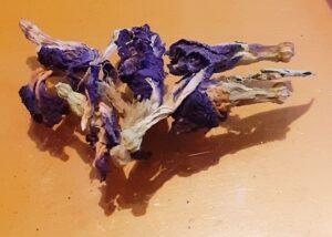 butterfly pea flower fiori blu pisello